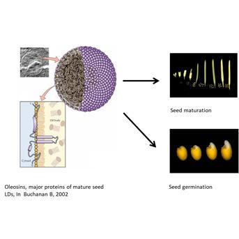 Dynamique et structure des corps lipidiques