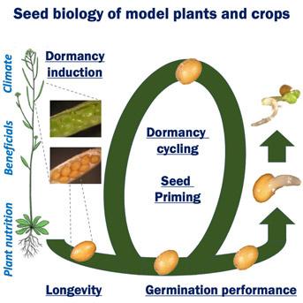 Physiologie de la germination