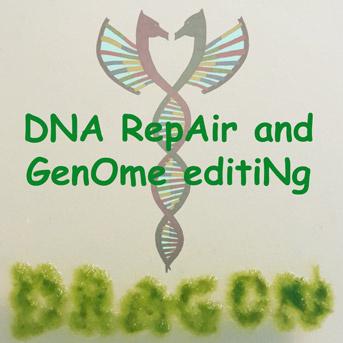 Réparation de l'ADN et ingénierie des génomes
