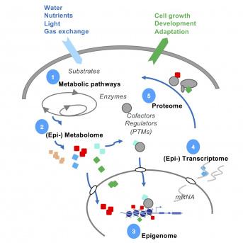 Dynamiques de la chromatine et signalisation