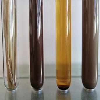Biopolymères lignocellulosiques : des assemblages pariétaux aux synthons pour la chimie verte