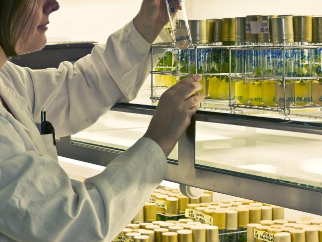 Chambre de culture in vitro