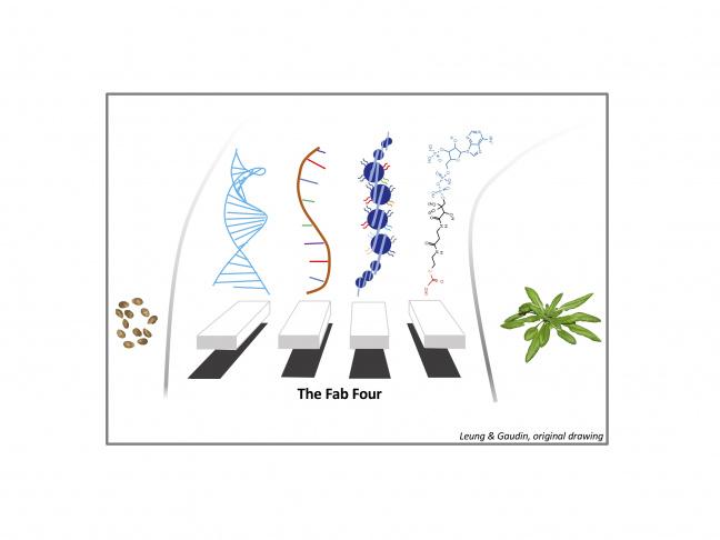 L'ADN, l'ARN, les histones et les métabolites contribuent aux régulation épigénétiques
