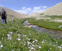A la recherche d'Arabidopsis