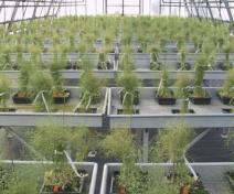 Production d'Arabidopsis en serre