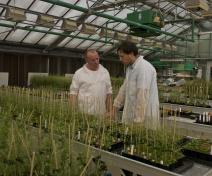 Observation de mutants d'Arabidopsis en serre