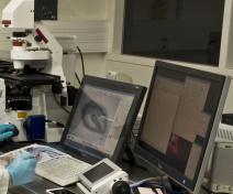 Microdissection par capture laser des tissus d'une graine