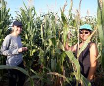 Membres de l'équipe dans un essai de maïs