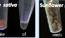 La micropresse extrait de l'huile d'une large gamme d'échantillons (graines, levure, microalgues)