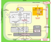 Lipides, membranes et réponse au stress (DeBigaultDuGranrut and Cacas 2016)