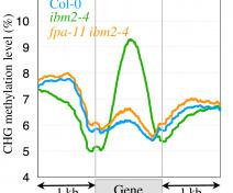 Graphe montrant les profils de méthylation