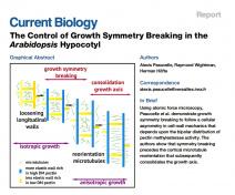 Le contrôle de la rupture de symétrie de croissance dans l'hypocotyle d'Arabidopsis