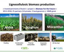 La production de la biomasse lignocellulosique, « Biomasse pour le futur ».
