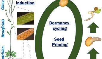Germination Physiology