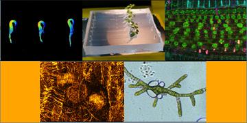 """Journée scientifique """"Les Plantes en temps réel"""""""
